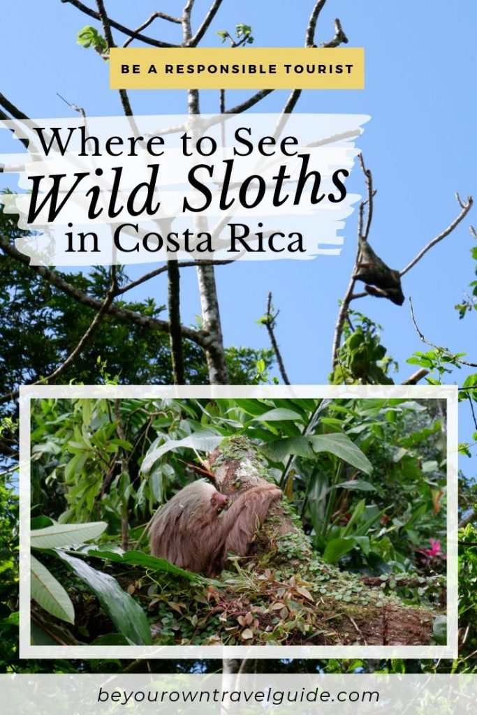 Where to See Wild Sloths Costa Rica