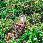 belize booby bird